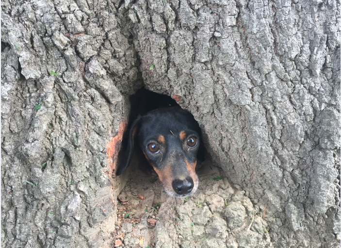 Off-duty troopers rescue dog stuck in tree trunk