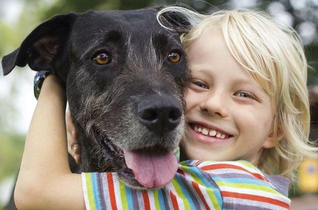 Lexington Humane Society Facebook