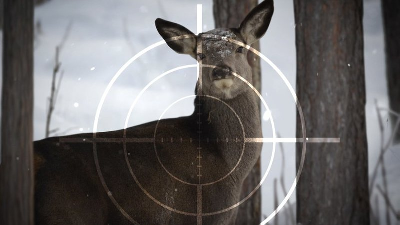 Kentucky fish and wildlife commission proposes new deer for Kentucky fishing license cost