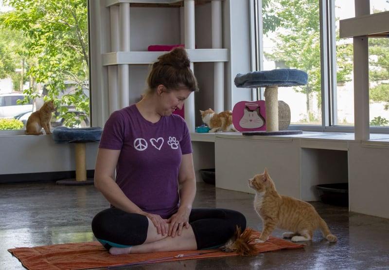 Lexington Ky Humane Society Cats