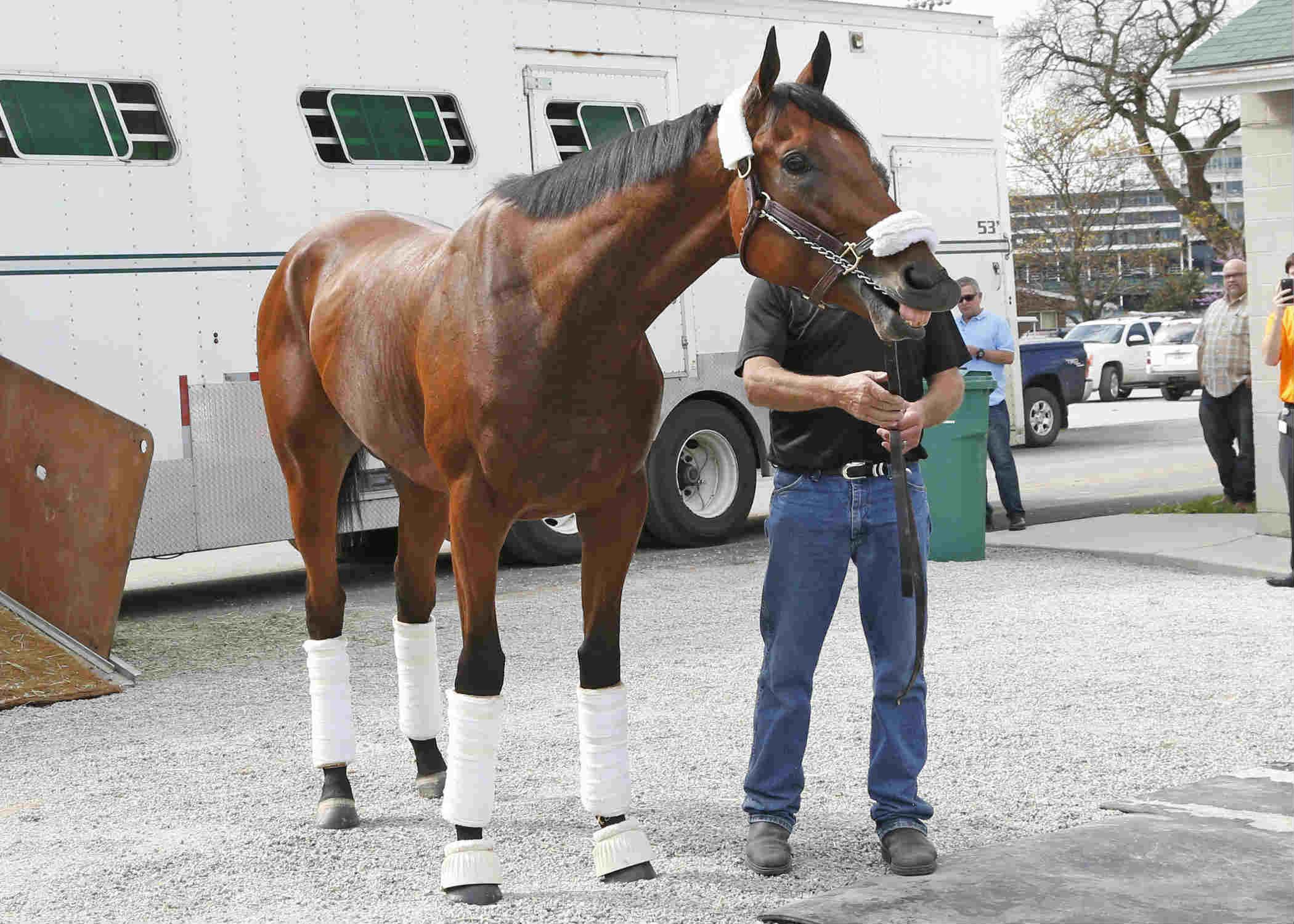 American Pharoah 1-5 Favorite in 10-Horse Field for Travers ...